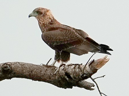 118. Kruger Nat Park, South Africa