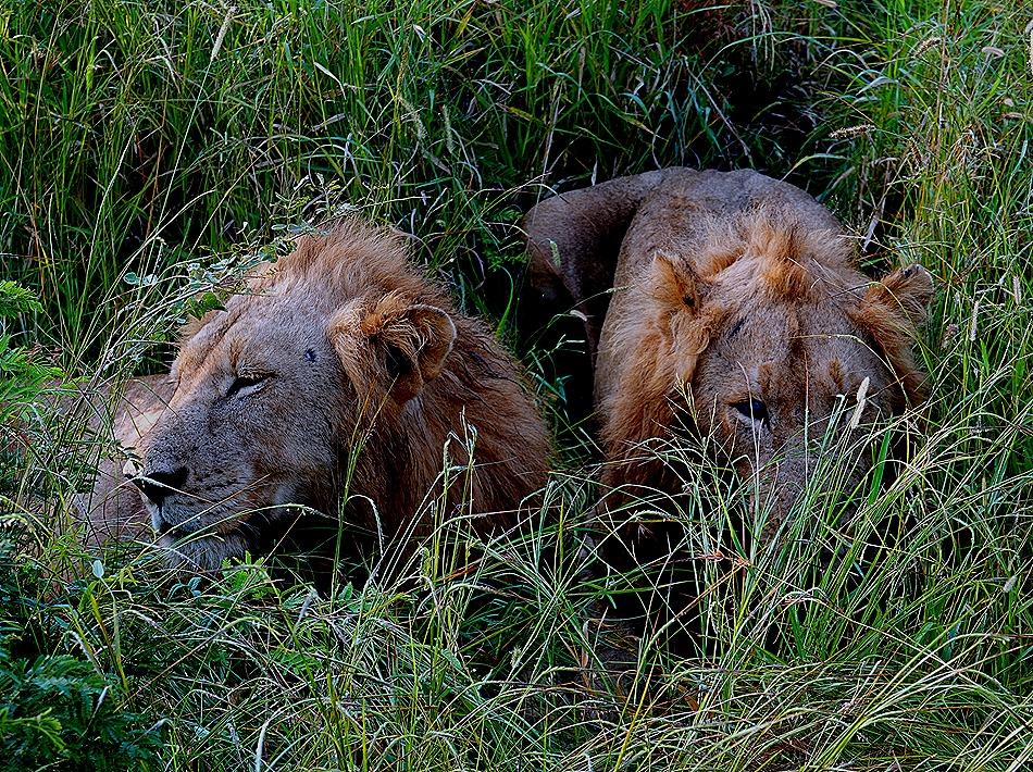119. Kruger Nat Park, South Africa