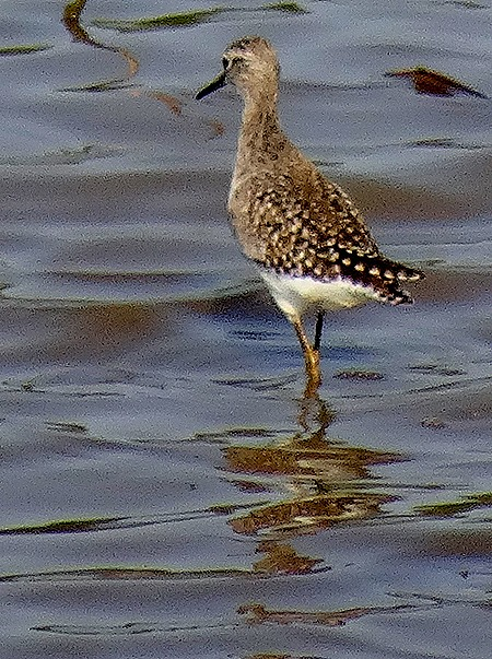 121. 010418Maputo, Mozambique & Kruger Nat Park, South Africa