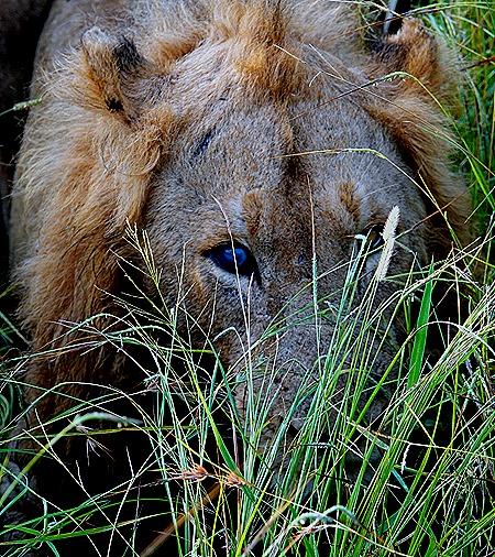 121. Kruger Nat Park, South Africa
