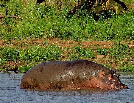 122. 010418Maputo, Mozambique & Kruger Nat Park, South Africa