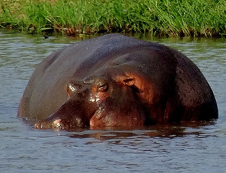 124. 010418Maputo, Mozambique & Kruger Nat Park, South Africa