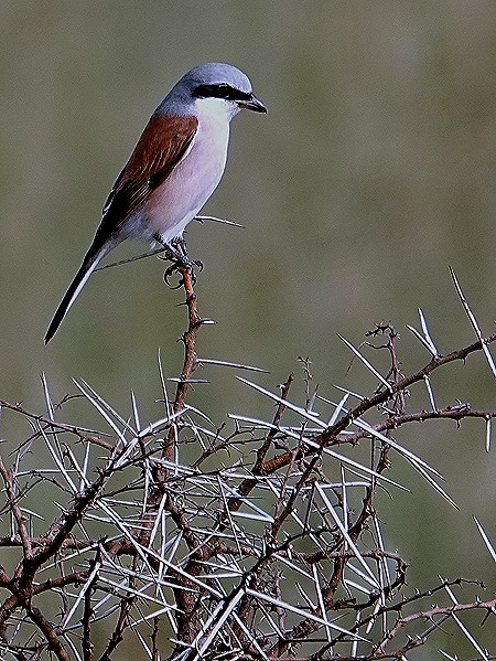 124. Kruger Nat Park, South Africa