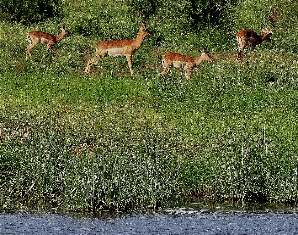 126. 010418Maputo, Mozambique & Kruger Nat Park, South Africa