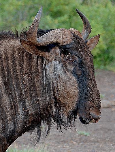 129. Kruger Nat Park, South Africa