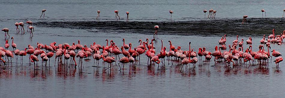 12a. Walvis Bay, Namibia080418_stitch