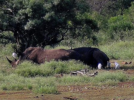 131. 010418Maputo, Mozambique & Kruger Nat Park, South Africa