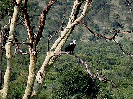 132. 010418Maputo, Mozambique & Kruger Nat Park, South Africa