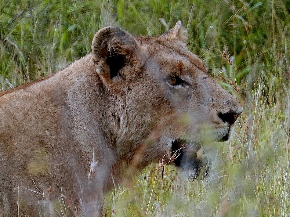 133. Kruger Nat Park, South Africa