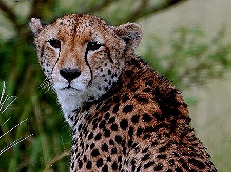 134. Kruger Nat Park, South Africa