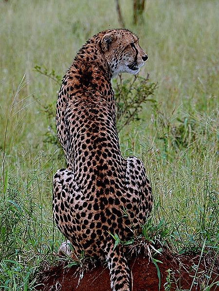 138. Kruger Nat Park, South Africa