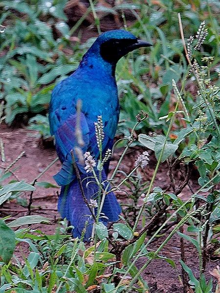 14. Kruger Nat Park, South Africa