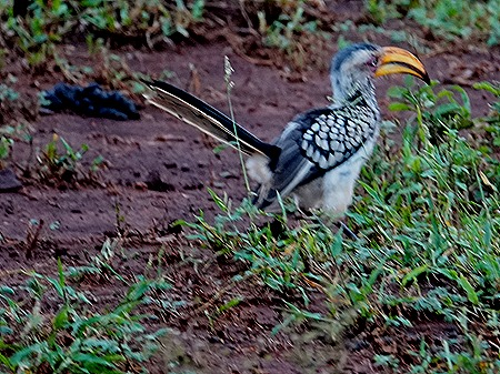 144. Kruger Nat Park, South Africa