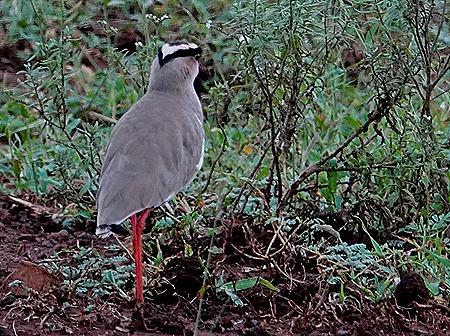147. Kruger Nat Park, South Africa