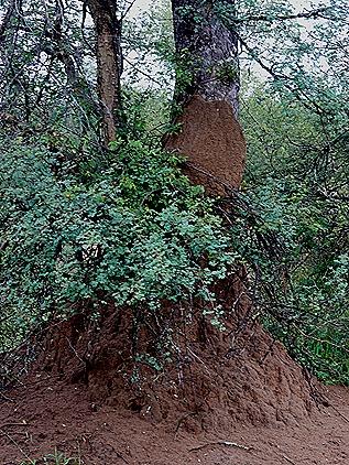 15. Kruger Nat Park, South Africa