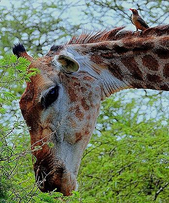 153a. 010418Maputo, Mozambique & Kruger Nat Park, South Africa