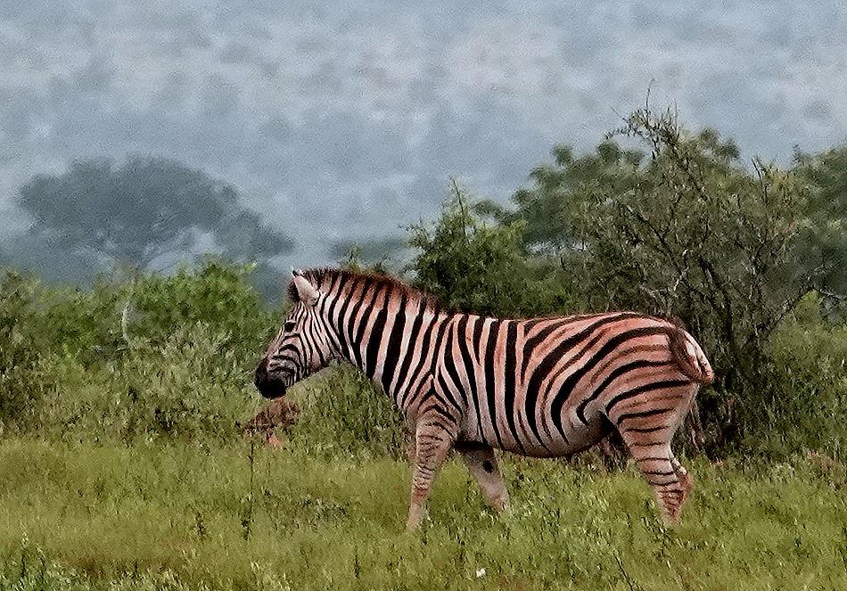 157. Kruger Nat Park, South Africa