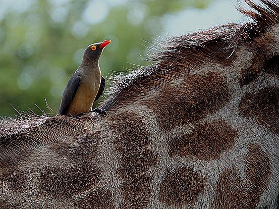 159. 010418Maputo, Mozambique & Kruger Nat Park, South Africa
