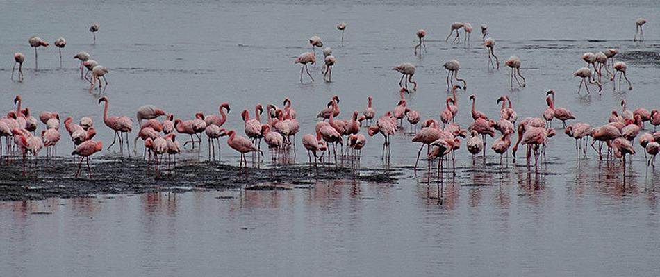 15a. Walvis Bay, Namibia080418_stitch