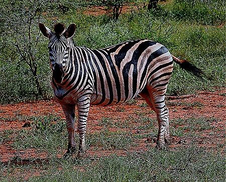 161. 010418Maputo, Mozambique & Kruger Nat Park, South Africa
