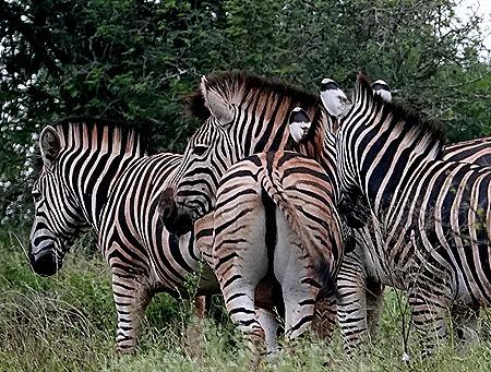 161. Kruger Nat Park, South Africa
