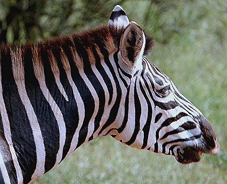162. 010418Maputo, Mozambique & Kruger Nat Park, South Africa