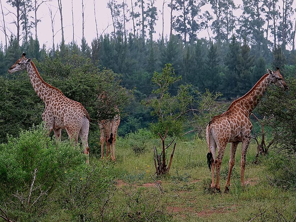 163. Kruger Nat Park, South Africa