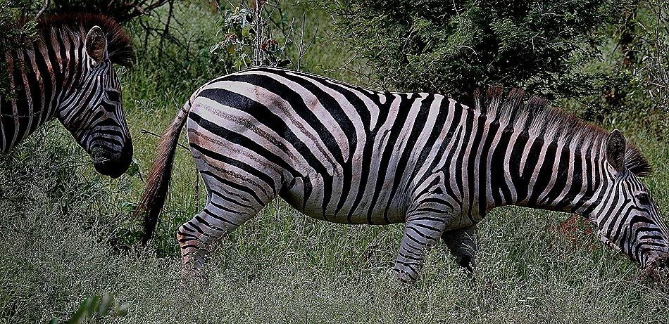 164. 010418Maputo, Mozambique & Kruger Nat Park, South Africa