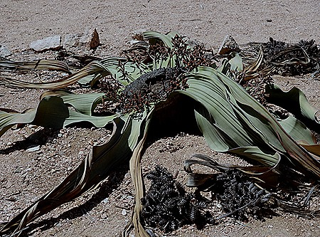 166c. Walvis Bay, Namibia