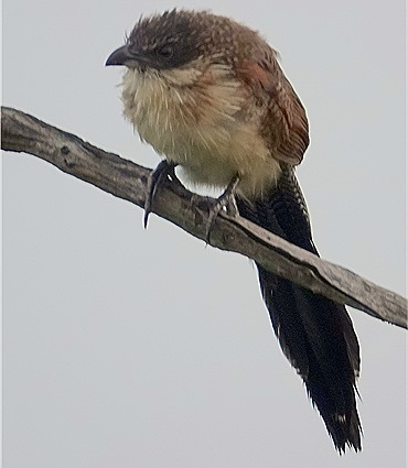 17. Kruger Nat Park, South Africa