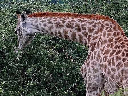 171. Kruger Nat Park, South Africa