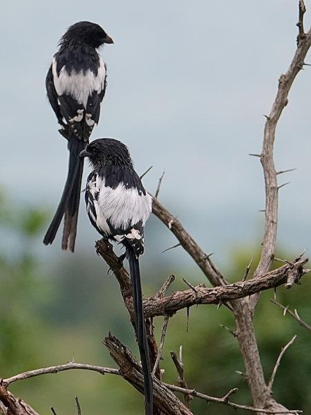 176. Kruger Nat Park, South Africa