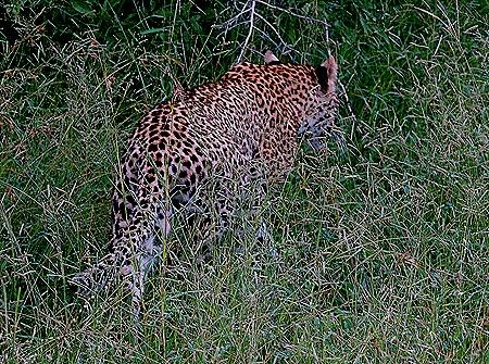 178. Kruger Nat Park, South Africa