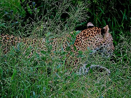 180. Kruger Nat Park, South Africa
