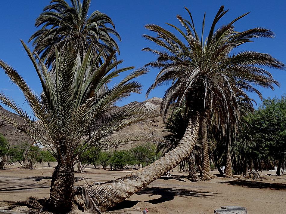 185. Walvis Bay, Namibia080418
