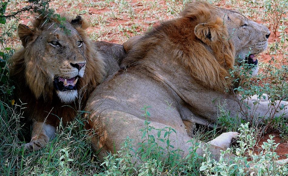 189. 010418Maputo, Mozambique & Kruger Nat Park, South Africa