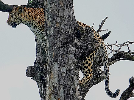 192. Kruger Nat Park, South Africa
