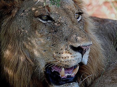 196. 010418Maputo, Mozambique & Kruger Nat Park, South Africa