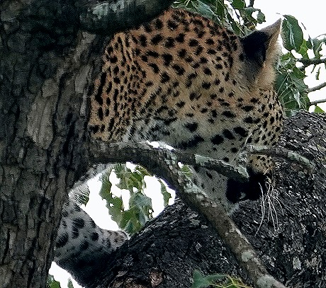 196. Kruger Nat Park, South Africa