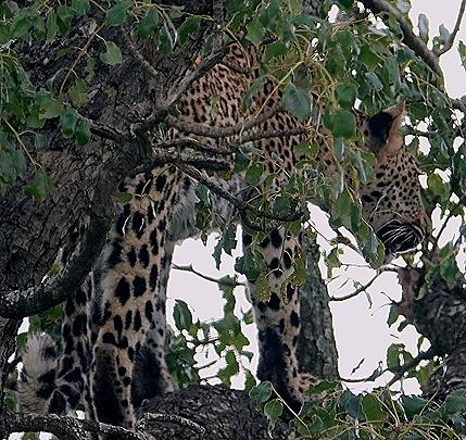 198. Kruger Nat Park, South Africa
