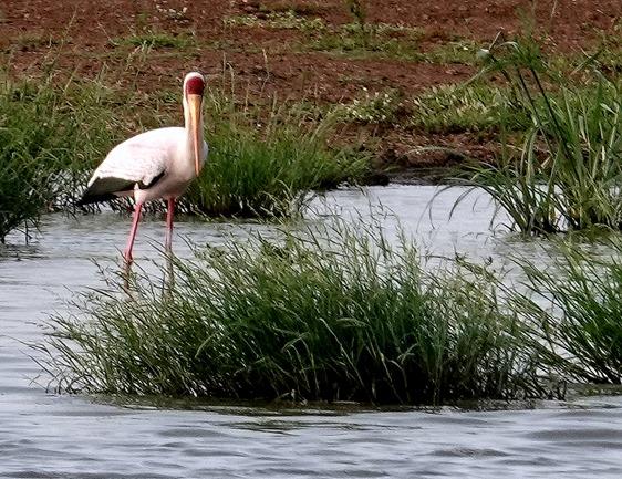 208. 010418Maputo, Mozambique & Kruger Nat Park, South Africa