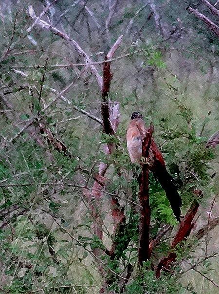 209. Kruger Nat Park, South Africa