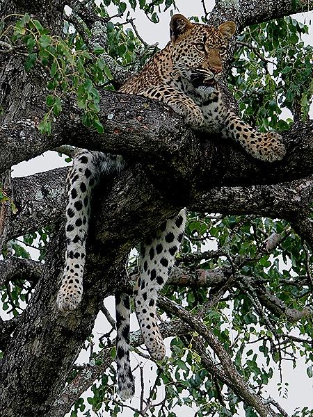 210. Kruger Nat Park, South Africa