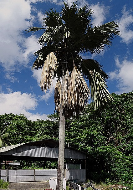 210a. Victoria, Mahe, Seychelles_stitch