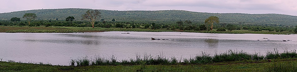 210b. Kruger Nat Park, South Africa_stitch
