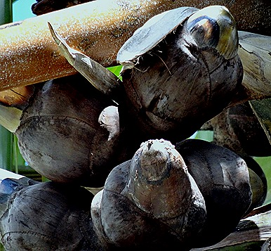 213. Victoria, Mahe, Seychelles