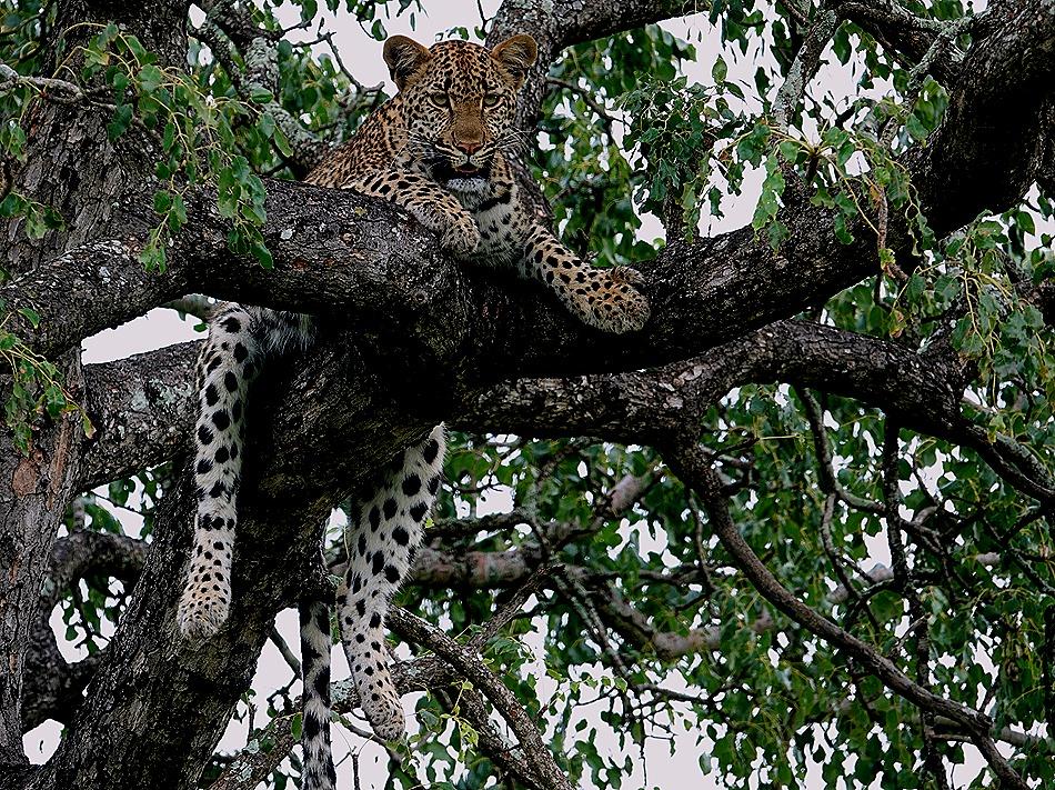 216. Kruger Nat Park, South Africa