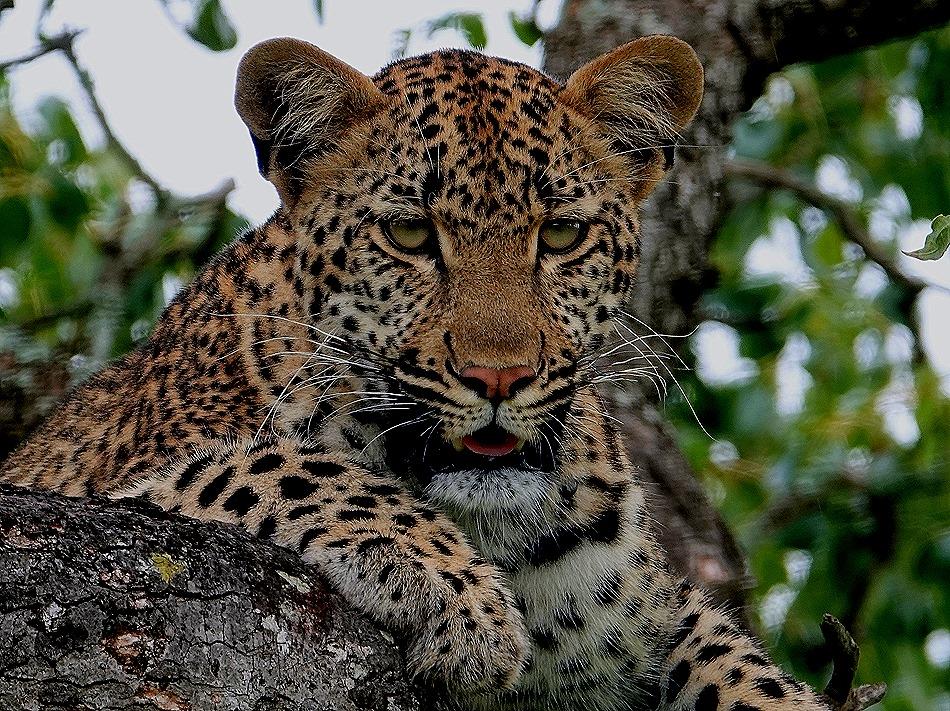 219. Kruger Nat Park, South Africa