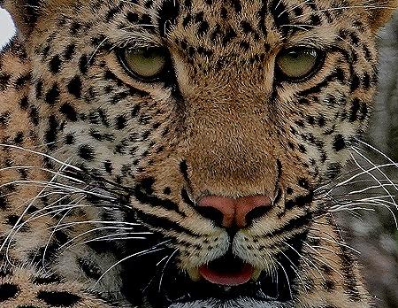 219a. Kruger Nat Park, South Africa
