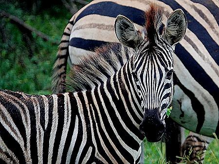 22. Kruger Nat Park, South Africa